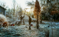 Frosty ground, a man in the garden of a blue wooden house.